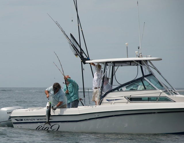 Fishing Charter with Peconic Water Sports in the Hamptons catching a Bluefish near Sag Harbor, New York